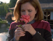 Janeway with a rose
