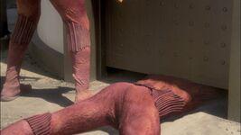 Anatomia suliban-0108
