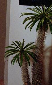 Cactus, Yar's quarters