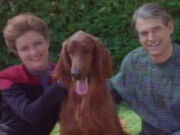Janeway Hund