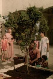Ressikan tree