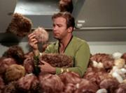 180px-Kirk surrounded by Tribbles