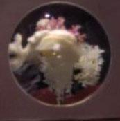 Livingston as a jellyfish