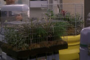 Sickbay plants in cages, 2152