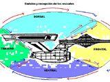 Escudos: Hipótesis de funcionamiento