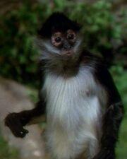 Neue-Erde-Primat