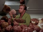 Kirk mit Tribbles