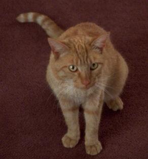 Spot, Data's cat