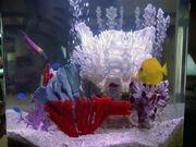 Fish Picards quarters