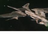 Romulan warbird (2399)
