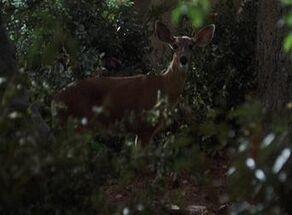 A Terran deer