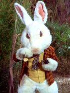 Kaninchen Wunderland 2267