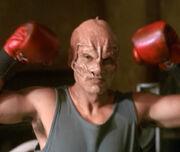 Terrellian boxer