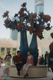 Yorktown tree