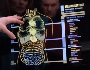 Takaran anatomy