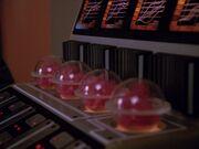 Diomedianisches rotes Moos in Inkubationsbehältern