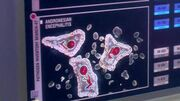 AndronesianEncephalitisPathogen
