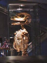 Gorn skeleton