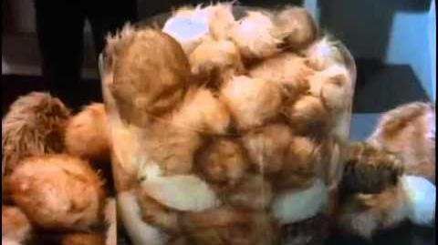 "TOS ""The Trouble With Tribbles"" - ""Tribulations"""