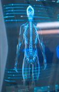 Kelpien skeletal structure
