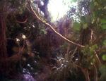 Dschungel von Soukara
