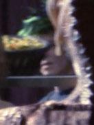 Xanthan bazaar alien 15