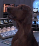 Beverly dog