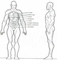 Vulcan anatomy - Star Fleet Medical Reference Manual