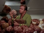 Kirk surrounded by Tribbles