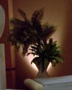 Ligon II plants 2
