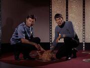 McCoy meldet den Tod des Tieres
