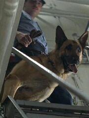Hundeführer Enterprise CVN-65 1986