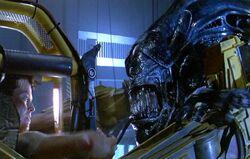Ripley vs. Queen
