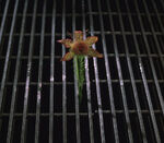 Jeff-flower SS 01