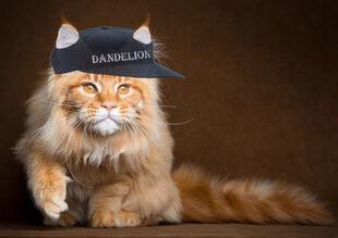 :Категория:Коты
