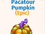 Pacatour Pumpkin