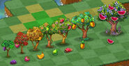 Fruit Baring Trees and Their Corresponding Fruits