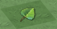 Dragon Tree Leaf