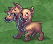 Young Cerberus