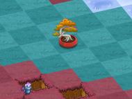 Zen-dragon-charms-level-10