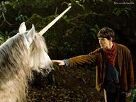 Images unicorn