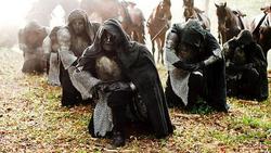 Die Ritter von Medhir