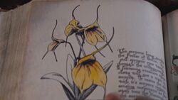 Kwiat mortaeusu
