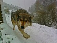 Wolf Behind The Scenes Series 5
