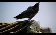 Crow on dead guard in nemeth