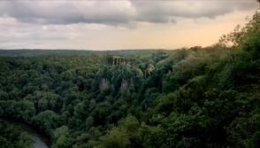 Odin trees