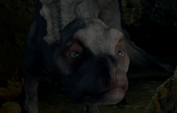 Aithusa Arthur's Bane Part Two image