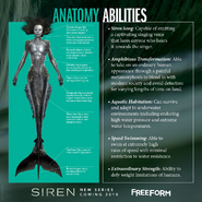 Siren Mermaid Anatomy
