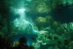 June Diving