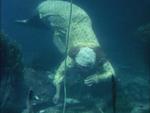 Berengaria Swimming in Nightgown